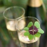 Lycklig växt av släktet Trifolium Fotografering för Bildbyråer