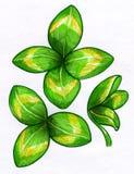 Lycklig växt av släktet Trifolium skissar Arkivbilder