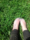 Lycklig växt av släktet Trifoliumfot Royaltyfri Bild