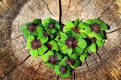 Lycklig växt av släktet Trifoliumhjärta royaltyfri fotografi