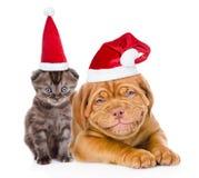 Lycklig valp och mycket liten kattunge i röda santa hattar som tillsammans ligger Är Royaltyfri Foto