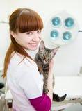 Lycklig veterinär med den devon rexkatten i veterinärkontor Royaltyfri Fotografi