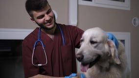 Lycklig veterinär som meddelar med hunden på den älsklings- kliniken lager videofilmer