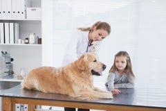 Lycklig veterinär som kontrollerar en labrador Royaltyfria Bilder