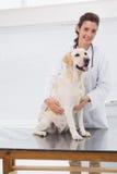 Lycklig veterinär som undersöker en gullig hund Arkivbild