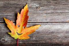 Lyckliga Autumn Leaf royaltyfri foto