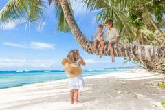Lyckliga barn - pojken och flickor - på palmträdet som är tropisk Arkivfoto