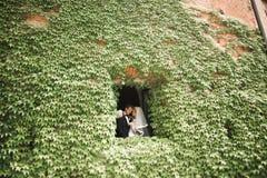 Lyckliga brölloppar som går i ett botaniskt, parkerar Arkivfoto