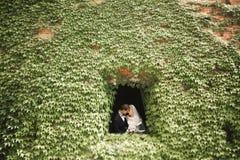 Lyckliga brölloppar som går i ett botaniskt, parkerar royaltyfri fotografi