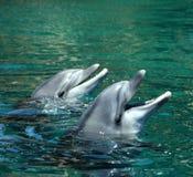lyckliga delfiner Royaltyfria Bilder