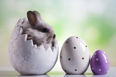Lyckliga easter, behandla som ett barn kaninen Royaltyfri Foto