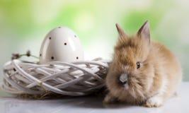 Lyckliga easter, behandla som ett barn kaninen, vår Royaltyfri Bild