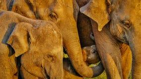 lyckliga elefanter Royaltyfri Foto