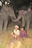 lyckliga elefanter Royaltyfria Foton