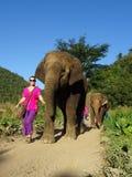 lyckliga elefanter Royaltyfri Bild