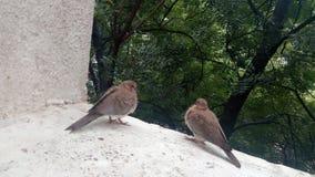 Lyckliga fåglar Arkivfoto