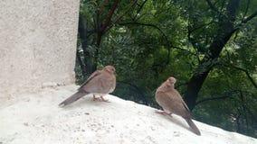 Lyckliga fåglar Arkivbild
