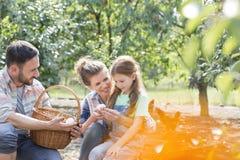 Lyckliga föräldrar som visar nya ägg till dottern på lantgården arkivfoto