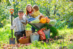 Lyckliga familjskördar av äpplen Royaltyfria Bilder