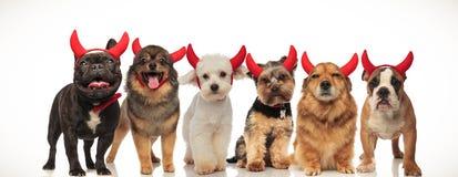 6 lyckliga gulliga hundkapplöpning som bär jäkelhorn arkivbilder
