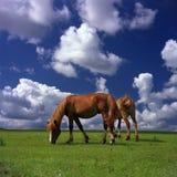 lyckliga hästar royaltyfria bilder