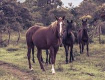 Lyckliga hästar som hänger runt om kullen fotografering för bildbyråer