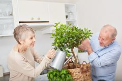 Lyckliga höga par som arbeta i trädgården fruktträdet Arkivbilder