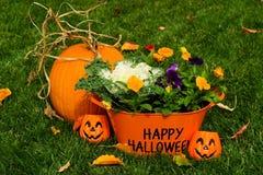 lyckliga halloween Royaltyfria Foton