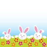 lyckliga kaniner Royaltyfri Fotografi