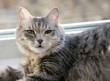 lyckliga katter Arkivfoton