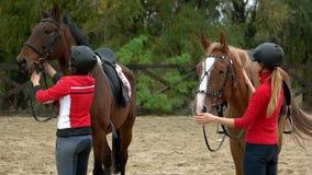 Lyckliga kvinnliga ryttare som förbereder deras häst för att rida stock video