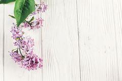 lyckliga mödrar för dag den härliga lilan blommar på lantlig vit woode Arkivfoton
