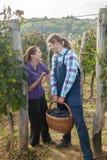 Lyckliga par i vingård Arkivfoton