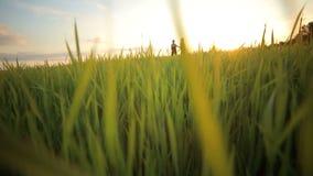 Lyckliga par som har gyckel och spring i vetefält lager videofilmer