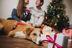 Lyckliga par som kramar på julträdet med ljus och den gulliga hunden Arkivbild
