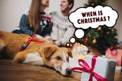 Lyckliga par som kramar på julträdet med ljus och den gulliga hunden Royaltyfri Bild