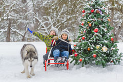 Lyckliga pojkar som sledding nära julträd och hund i den utomhus- vinterdagen Royaltyfri Bild