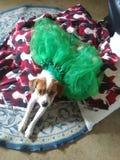 Lyckliga St Patrick & x27; s-dag royaltyfri fotografi