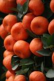 lyckliga tangerines Arkivbilder