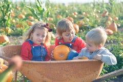 Lyckliga ungar som sitter inom skottkärran på fältpumpalappen Royaltyfri Bild