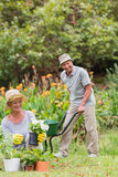 Lyckligt arbeta i trädgården för farmor och för farfar royaltyfria foton