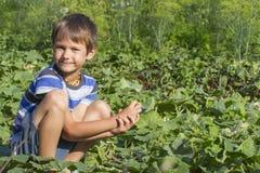 Lyckligt barn som väljer nya grönsaker i trädgården på sommardagen Familj sunt som arbeta i trädgården, livsstilbegrepp Royaltyfri Foto