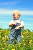 Lyckligt behandla som ett barn i maskrosfält Fotografering för Bildbyråer