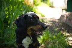 Lyckligt för djur för hundnaturlantgård pappy Arkivbilder