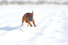 Lyckligt förfölja i snow Royaltyfri Foto