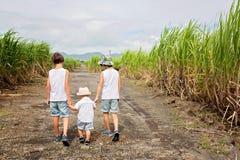 Lyckligt folk, barn, spring i sockerrörfält på den Mauritius ön royaltyfri bild