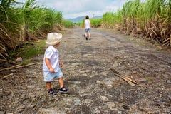 Lyckligt folk, barn, spring i sockerr?rf?lt p? den Mauritius ?n royaltyfri bild