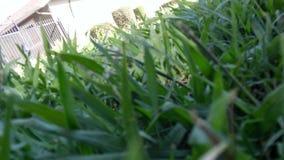 Lyckligt grönt gräs Arkivbilder