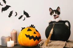 Lyckligt halloween begrepp gulligt pottsammanträde i häxakittelwi royaltyfri foto