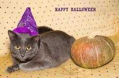 Lyckligt halloween kort med katten och pumpa Fotografering för Bildbyråer